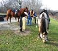 VHP Horses